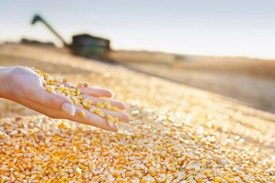 """With the outbreak of extreme weather and the impact of the world's """"granary"""", how long will the price of agricultural products continue to rise?"""